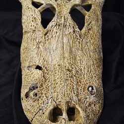 Treasures from the MOAS Natural History Collection