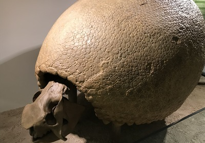 Discovering the Glyptodont