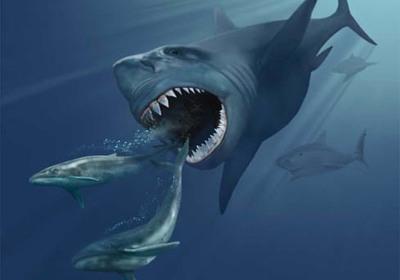 Giant Megalodon Shark